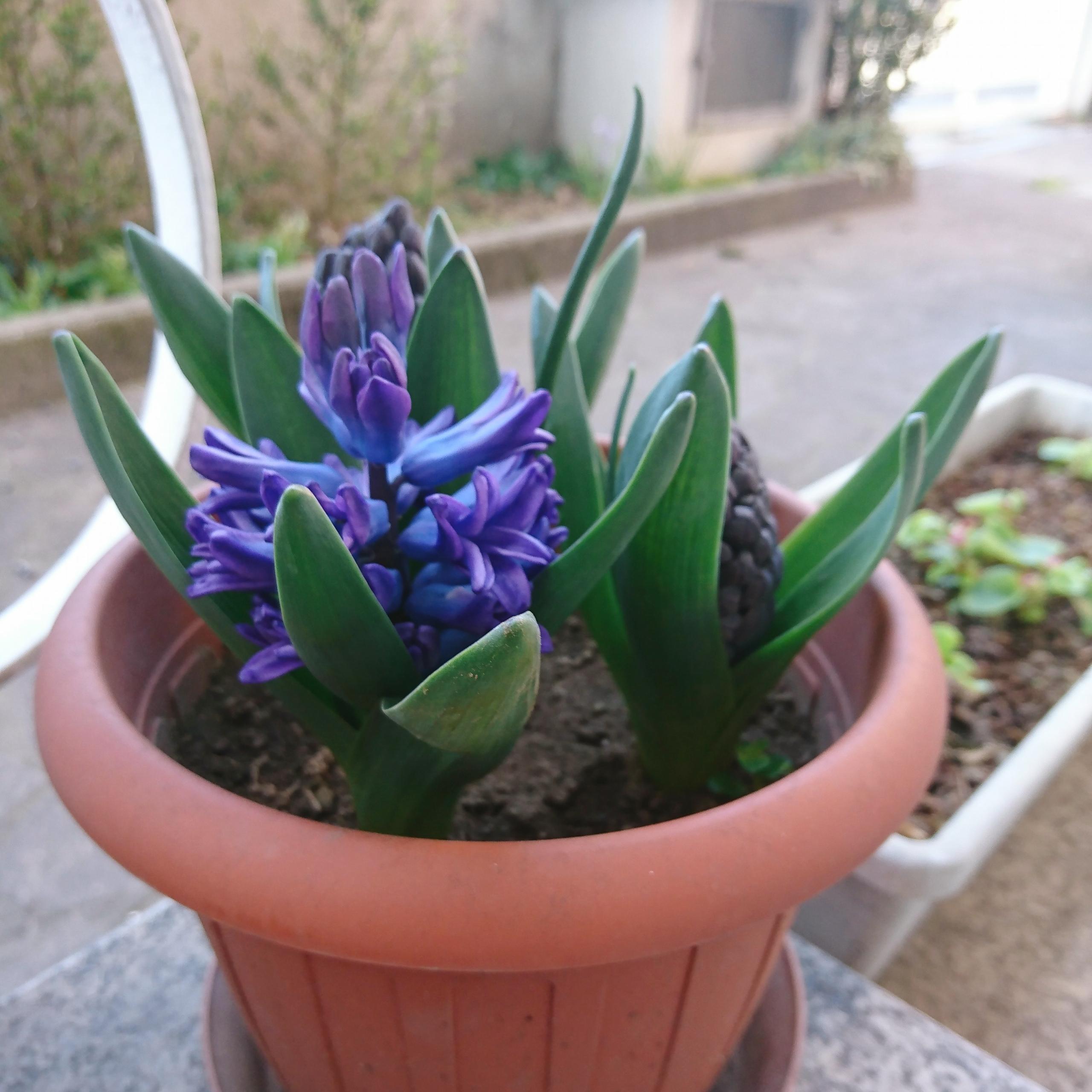 È tornata la Primavera - 1