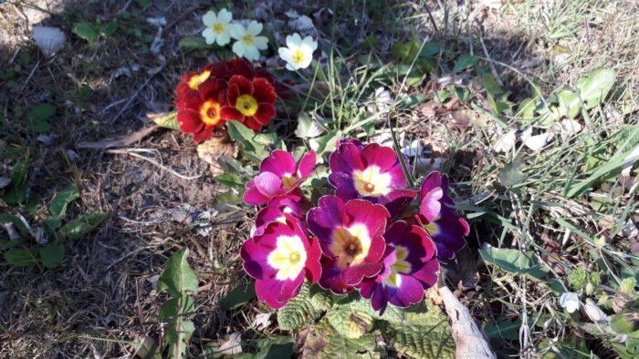 È tornata la Primavera